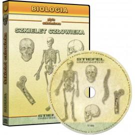 Szkielet czlowieka - układ...