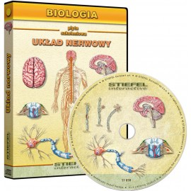 Układ nerwowy człowieka CD